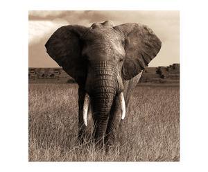 """Nástěnná dekorace""""Elephant"""", 1 x 70 x 70 cm"""