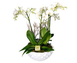 Blumengesteck Kaiserorchidee