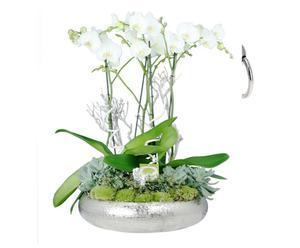 Blumengesteck Orchidee