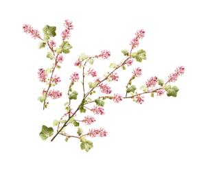 Wandsticker CURRANT TREE