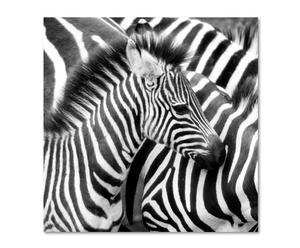 Digitaldruck Zebra II auf Acrylglas