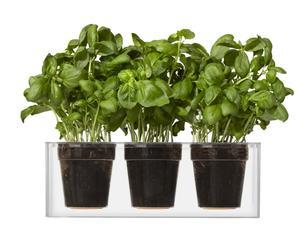 Macetero para 3 plantas en policarbonato Summer