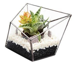Terrario de plantas suculentas Liva