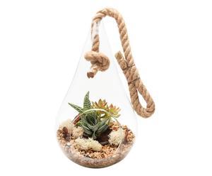 Terrario de plantas suculentas para colgar Vita