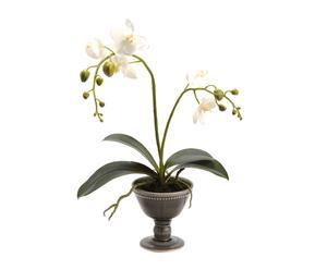 Set de 2 orquídeas con macetas en forma de copa