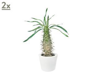 Set de 2 cactus en una maceta