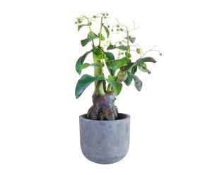 Succulent africano en madera de cerámica