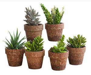 Set de 6 macetas de cerámica - Marrón