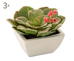 Set de 3 Plantas Echeveria artificiales