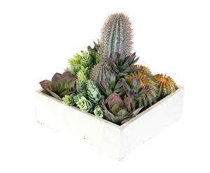 Bandeja bola cactus II