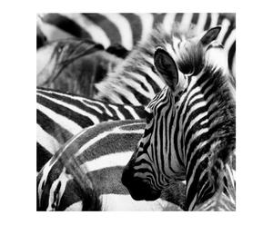 Lienzo Zebra
