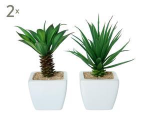 Set 4 plantas suculentas con maceta de cerámica I