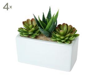 Set 4 plantas suculentas con maceta de cerámica II