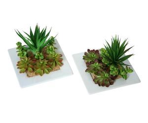 Set 2 plantas suculentas con maceta de cerámica