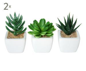Set 6 plantas suculentas con maceta de cerámica I