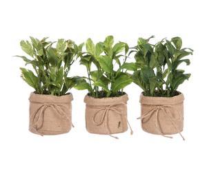 Set de 3 plantas de Laurel con tarro en plástico y poliéster