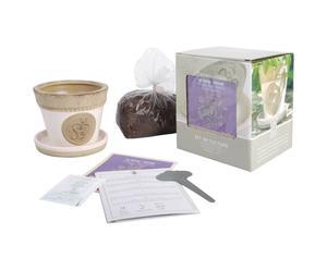 Set para cultivo de tomillo
