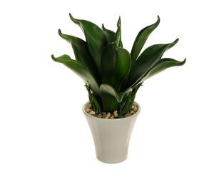 Planta de hojas gruesas en maceta de cerámica – verde y blanco