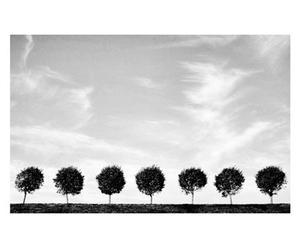 Fotografía sobre lienzo Árboles