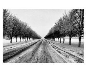 Fotografía sobre lienzo Camino