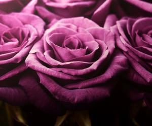 Toile imprimée Roses - 100*70 cm
