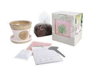 Kit pour cultiver la laitue, Céramique - L15