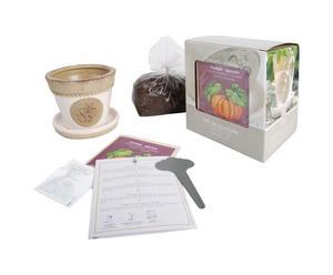 Kit pour cultiver la citrouille, Céramique - L15