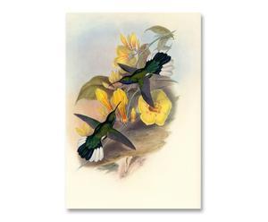 Litografia su carta Yellow Colibri' - 55x37 cm