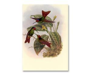 Litografia su carta Red Colibri' - 55x37 cm