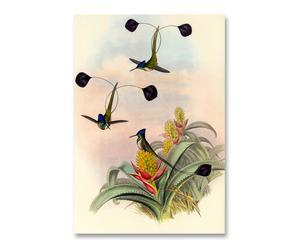 Litografia su carta Elegance Birds - 55x37 cm