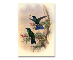 Litografia su carta Blu Colibri' - 55x37 cm