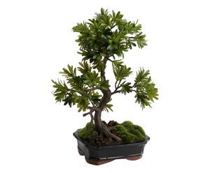 Vasi per bonsai custodi di tesori preziosi dalani e ora westwing
