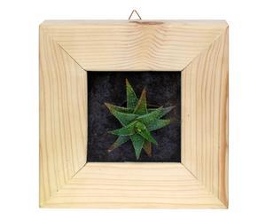 Quadro con pianta grassa Natura viva - 18x8x18 cm
