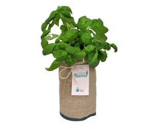 Sacco in juta con semi di basilico Un sacco bello - 30x12 cm