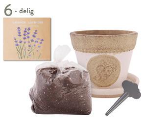 Tuinierset Lavendel Live, 6-delig, multicolour