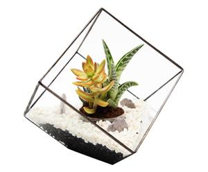 Planten terrarium-set Angus, 7-delig
