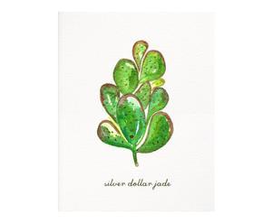 Affiche Silver dollar jade Herbs & Plants, Vert - 20*25