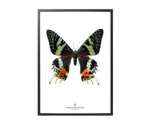 Poster New collection II, 70 X 50 cm
