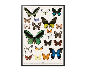 Poster Myriad, 100 X 70 cm