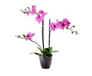 Decoratieve kunst Phalaenopsis Mandy, fuchsia, H 80 cm