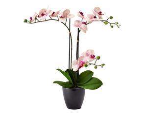 Decoratieve kunst Phalaenopsis Jamy, creme/fuchsia, H 80 cm