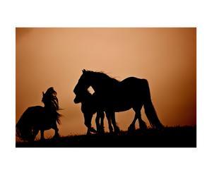 Glasprint Paarden in avondrood, oranje/zwart, 60 x 80 cm