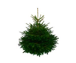 Kerstboom Nordmann XL, groen, H 175 cm