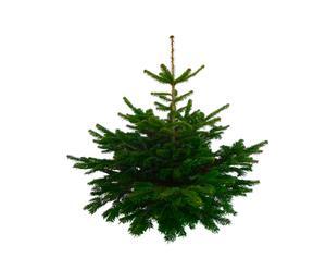 Kerstboom Nordmann S, groen, H 100 cm