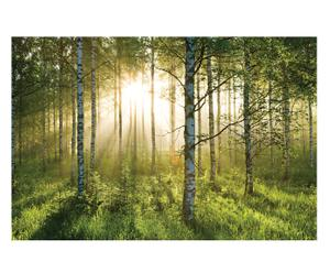 """Fototapeta """"Forest"""""""