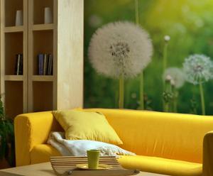 "Fototapeta laminowana do salonu ""Dandelion Nature 04"", 200 x 260 cm"