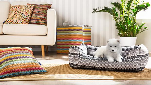 Dandy Dog & Home