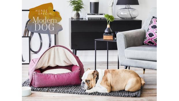 Moderne Hunde-Essentials