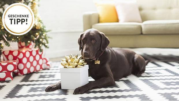 geschenke f r hundefreunde k rbe spielzeug geschirr. Black Bedroom Furniture Sets. Home Design Ideas