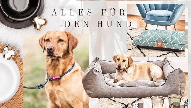 Must-haves für den Hund